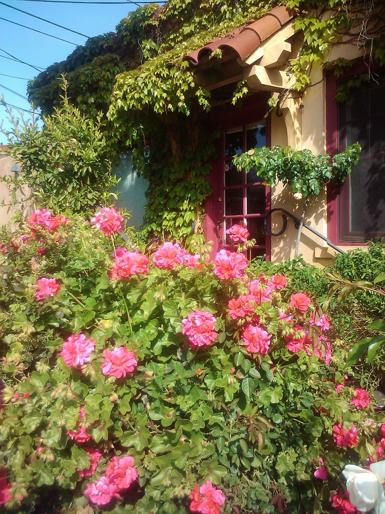 Santa Barbara, California, Blooming Flowers, Cute cottage, travel, vacation