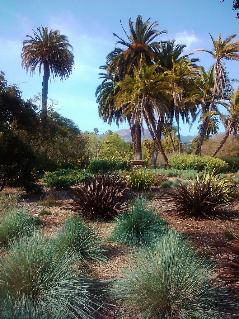 Santa Barbara, California, Blooming Flowers, Alice Keck Park, travel, vacation