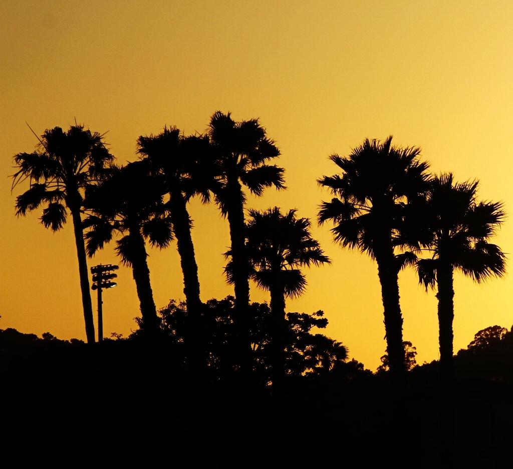 Santa Barbara Sunset, Harbor, Palm trees, Vacation in Santa Barbara, travel