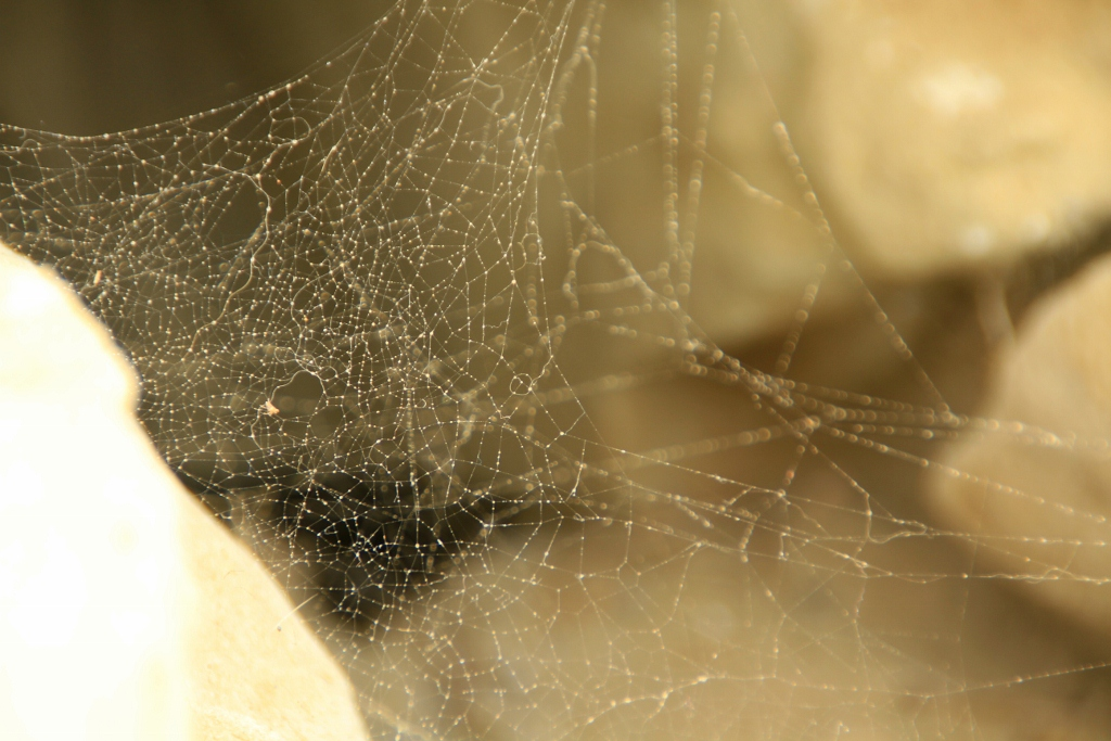 Web of Life, Day Trip to Faria Beach, California, Meditate, Spider Web