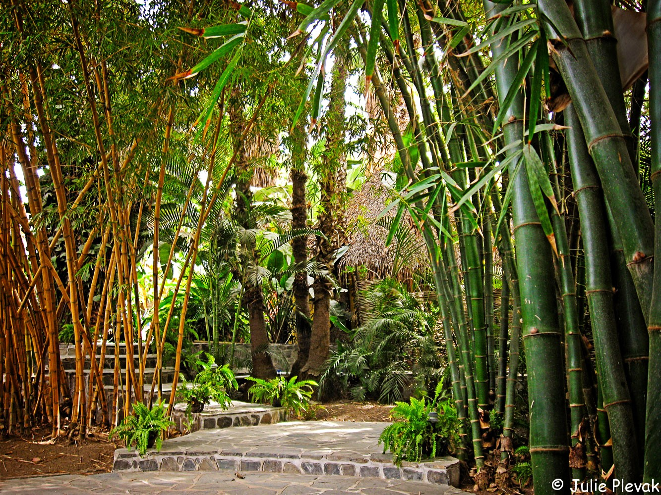 Bamboo jungle, Todos Santos, Mexico