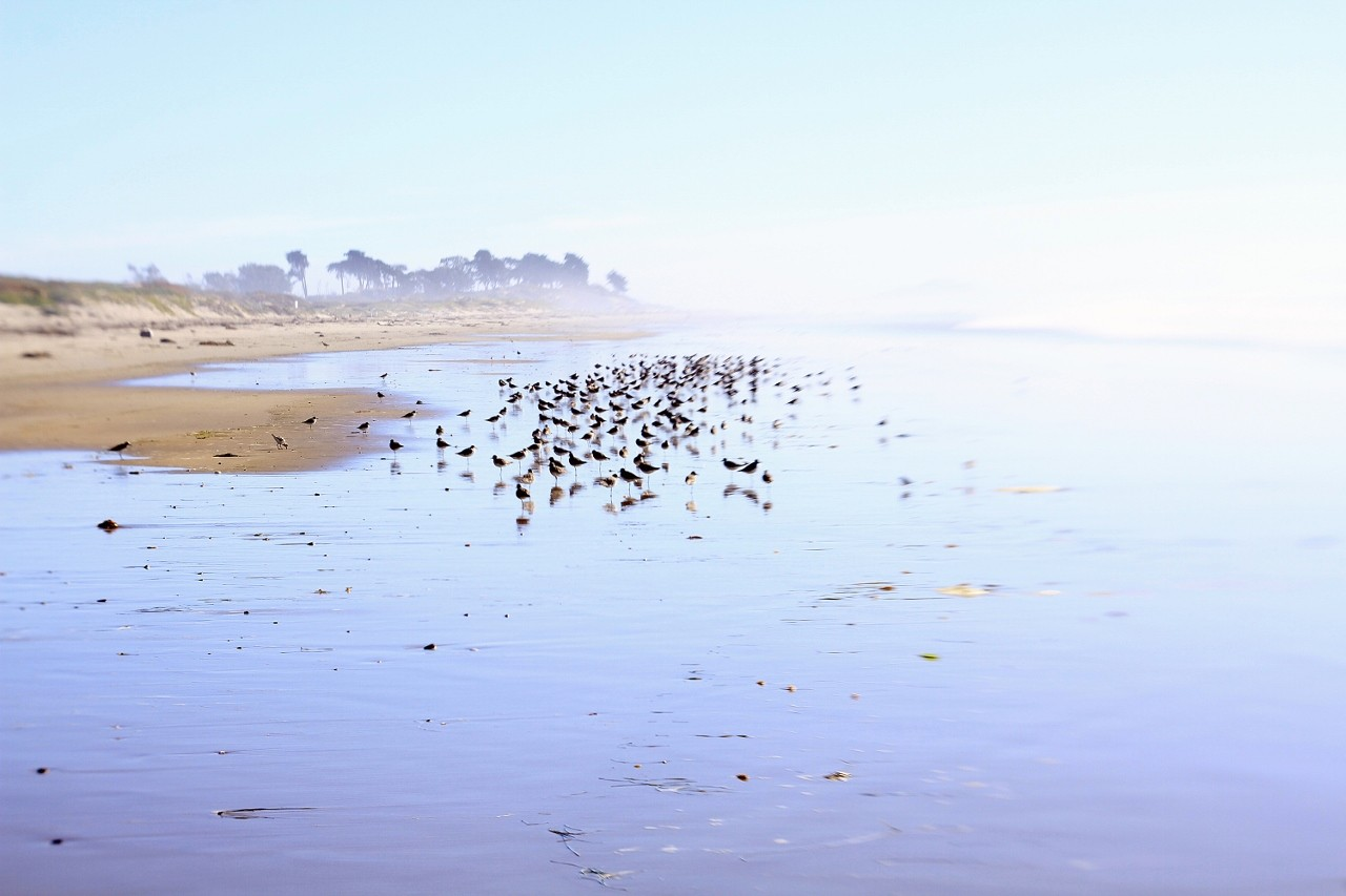Beach in Santa Barbara, California, Oceanfront, foggy day, travel, vacation