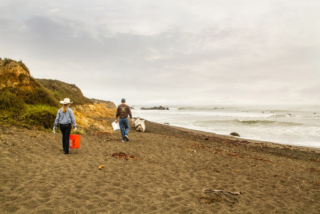 Cleaning up the coast of California, Eco Tourism, Cambria