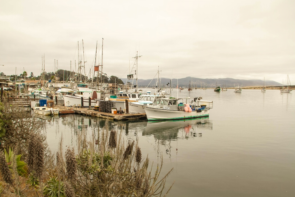 Travel in Morro Bay Harbor, California