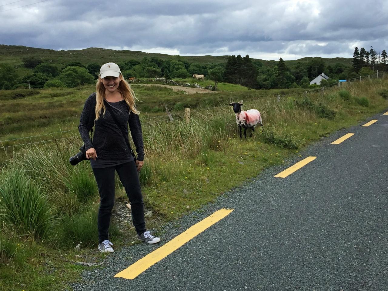 Taking photos of sheep in Ireland