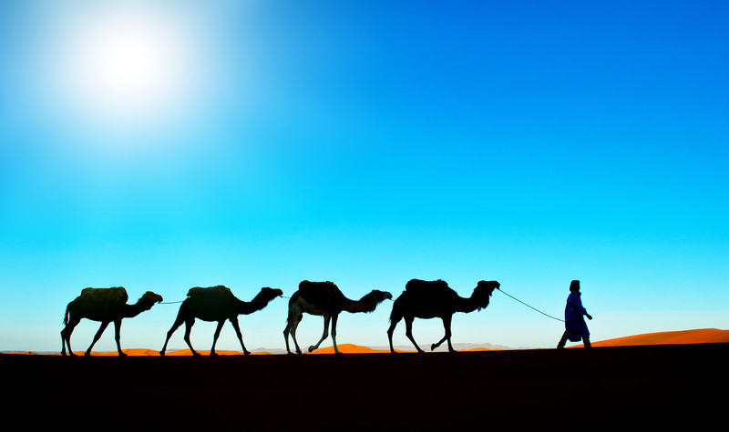 Camel caravan on the Sahara desert Morocco Photo Tour
